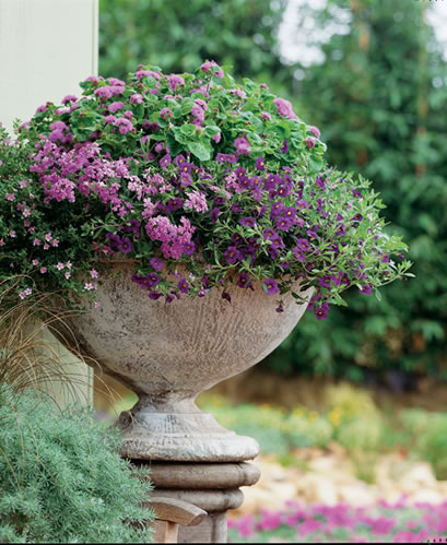 Container Garden Design 13 container gardening ideas potted plant ideas we love The Rest Of The Container Designs Are Different Ways Of Utilizing More Than One Color There Are As Many Ways To Combine Color As There Are Gardeners