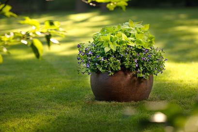 22 mejores flores para Full Sun   Flores tolerantes al calor para contenedores   Balcón Jardín Web