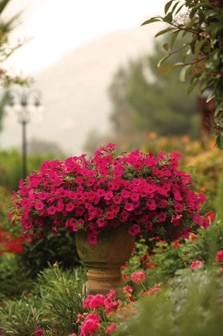 Container garden design color proven winners - Best flower combinations for containers ...