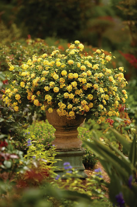 Container Garden Design - Color | Proven Winners on easy permaculture ideas, easy travel ideas, easy composting ideas, easy landscaping ideas, easy diy ideas, easy topiary ideas, easy christmas ideas, easy spring ideas, easy container plant ideas, easy entertaining ideas, easy container flower gardening, easy food ideas, easy garden, easy woodworking ideas, easy fall ideas, easy flower gardening ideas, flowers for flower pots ideas, easy sewing ideas, easy recycling ideas, easy xeriscaping ideas,