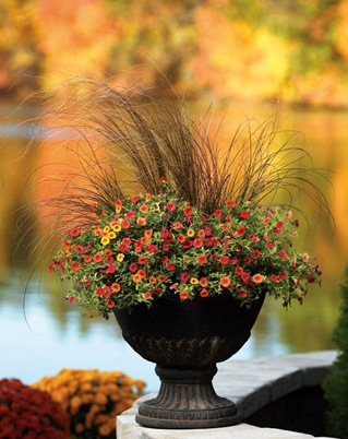 Container Garden Design Structure Proven Winners