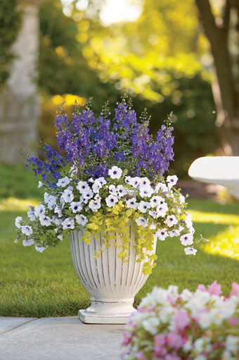 Container Garden Design container garden design ideas find this pin and more on container gardening ideas watering container gardening The Photo On The Left Is Anything Goes And Uses Daredevil Rosita As The Thriller The Center Photo Is Canyon Sunset And Uses Graceful Grasses Rubrum As