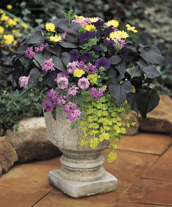 Container garden design foliage and texture proven winners - Best flower combinations for containers ...