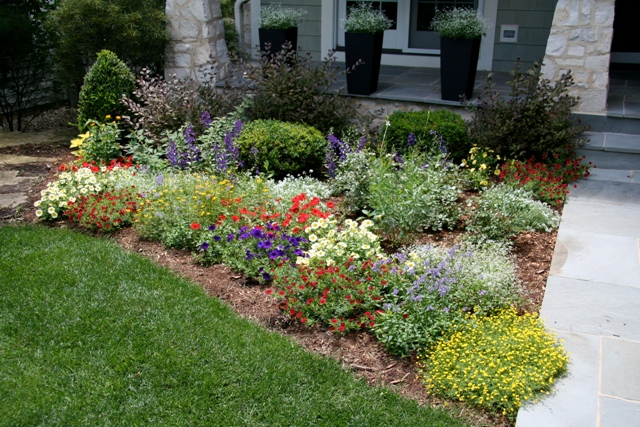 Dave 39 s garden 2010 proven winners for Best plants for front flower bed