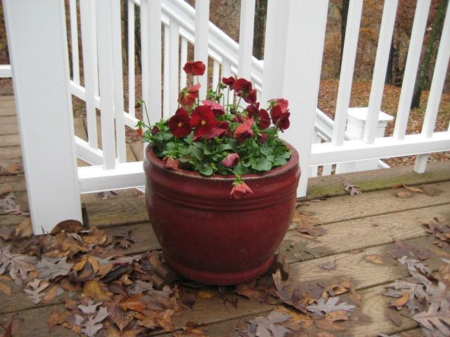 Container Garden Design Planting Proven Winners