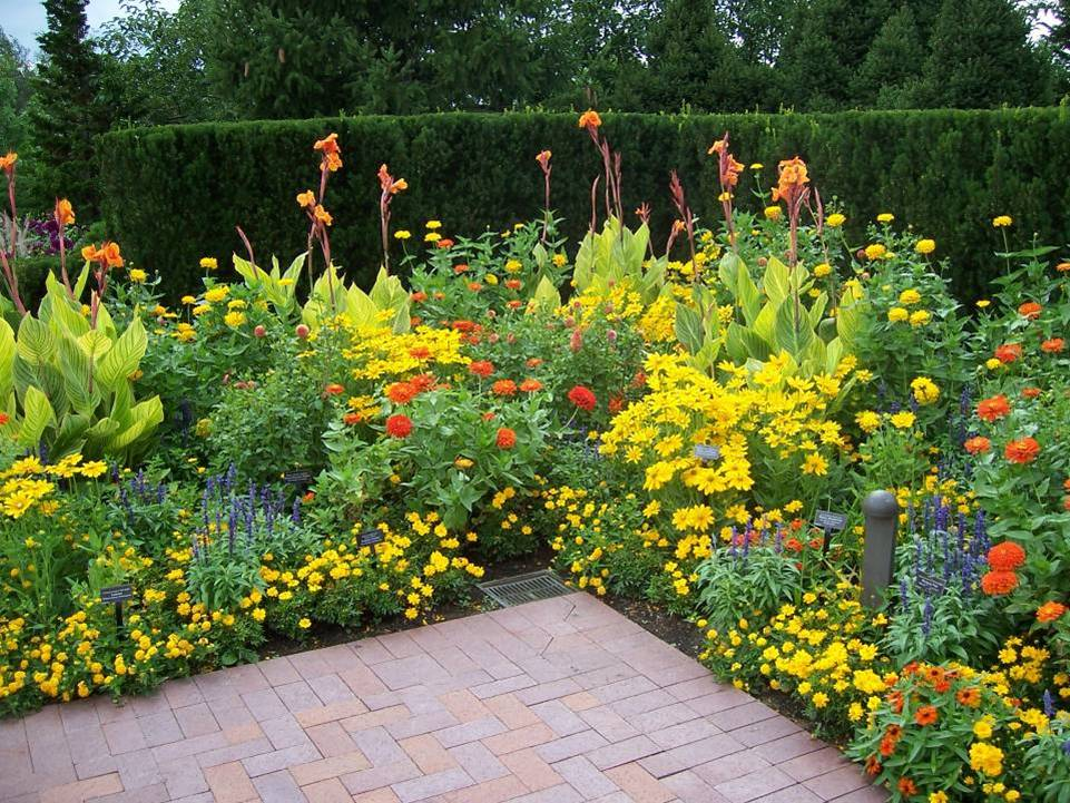 Hot Flower Garden : Basic design principles using color in the garden